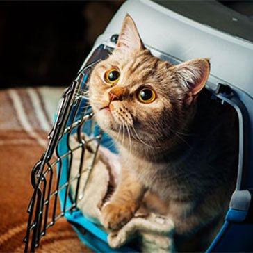 pet movers Singapore